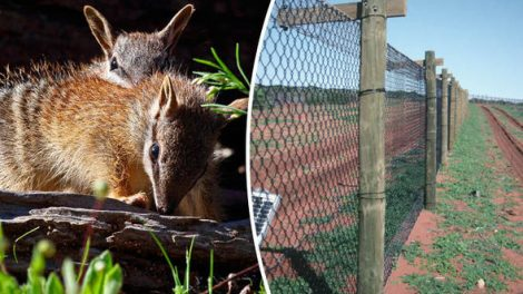 Australia completes world's largest cat-proof fence to protect endangered marsupials