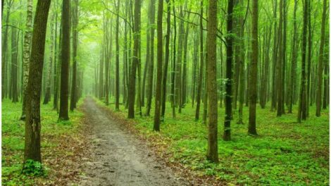 'sense accurate' thing no longer CO2 boosts international forest enlargement