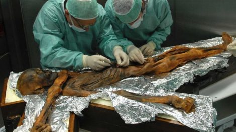 Iceman's belly contents give a glimpse of what humans ate in Copper Age