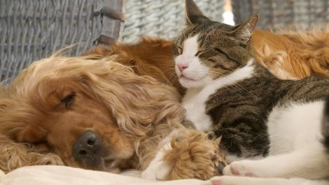 Pets at domestic, do cats and puppies truely fight like cats and dogs